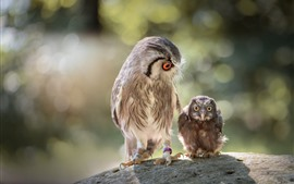 Coruja mãe e mocho