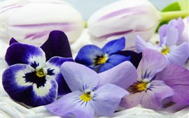 Pansy, colorful flowers