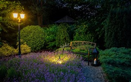 Park, bench, lavender, lamp, night