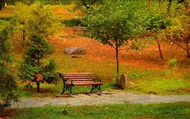 Parque, árboles, banco, camino, otoño