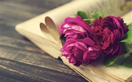 Preview wallpaper Pink and red roses, flowers, book