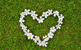 Plumeria, flowers, love heart, grass