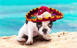 Cachorro, sombrero, arena, animal divertido