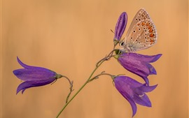 Flores de sinos roxos, borboleta
