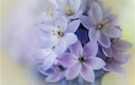 Flores púrpuras, inflorescencia