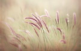 預覽桌布 紫色的草,朦朧