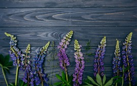 Purple lupine flowers, wood background