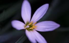 미리보기 배경 화면 자주색 난초, 꽃잎, 암술
