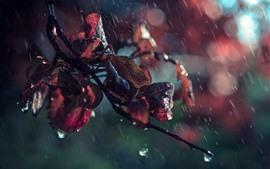 Red leaves in rain