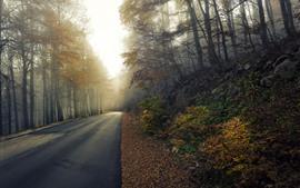 Дорога, деревья, осень, утро, туман