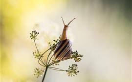 달팽이, 잔디
