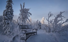 Snow, bench, trees, winter