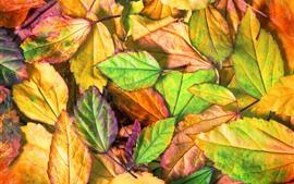 Algunas hojas, verde, amarillo, rojo
