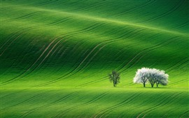 Preview wallpaper Spring, green fields, trees