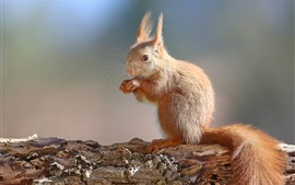 Squirrel standing up