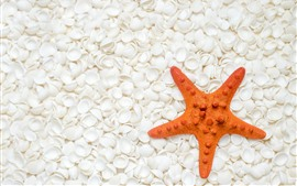 Starfish, white seashell
