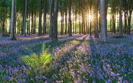 Verano, flores silvestres, árboles, bosque, rayos del sol