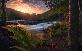 Pôr do sol, árvores, samambaias, rio, pedras