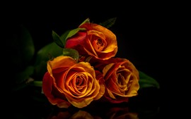 Preview wallpaper Three orange roses, black background