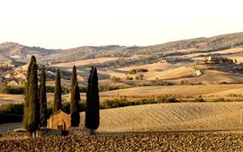 Toscana, Italia, campos, árboles, casas, campo
