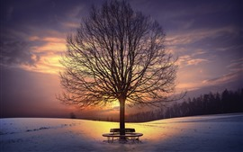 Trees, bench, snow, sunset, winter