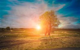 Árboles, campos, rayos del sol, salida del sol, paisaje de la naturaleza
