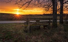 Árboles, hierba, banco, puesta de sol