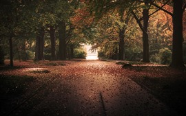 Preview wallpaper Trees, park, autumn, path