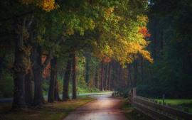 Árboles, camino, cerca, otoño