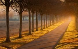 Árvores, estrada, sol, nevoeiro, manhã