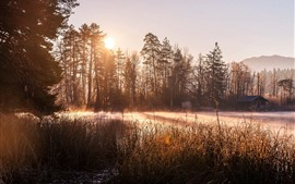 Trees, sunshine, lake, hut, morning, fog