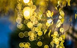 Twigs, leaves, glare, light circles