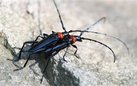 Dois insetos negros