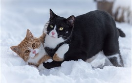 Two cats play game in snow