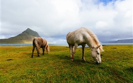 Preview wallpaper Two horses, grazing, grass, sea, Iceland