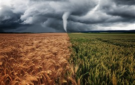 Тайфун, шторм, поля, зеленый и золотой