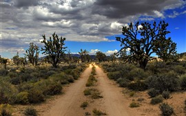USA, Mojave, Joshua Tree National Park, desert