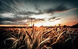 Campo de trigo, líneas eléctricas, nubes, anochecer