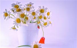 미리보기 배경 화면 화이트 카모마일 꽃, 꽃다발, 물방울