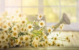 Preview wallpaper White chamomile flowers, light, hazy