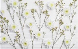 Crisantemo blanco, tablero de madera