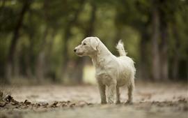 Cão branco olha para o lado, caminho