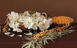 Preview wallpaper White kosmeya flowers and sea buckthorn