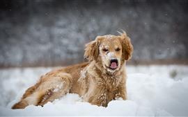Blanca nieve, perro marrón, invierno