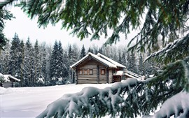 Winter, snow, pine trees, wood house