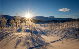 Preview wallpaper Winter, thick snow, trees, sun rays