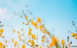 Flores amarelas, fundo do céu azul