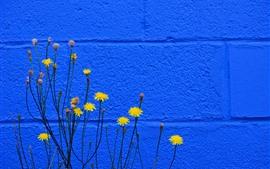 Flores amarillas, fondo azul de la pared