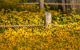 Preview wallpaper Yellow flowers, fence, garden