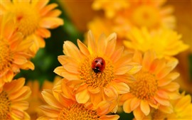 Preview wallpaper Yellow flowers, ladybug